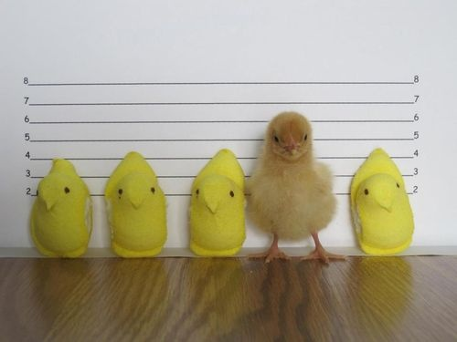 Easter can you pick the perp