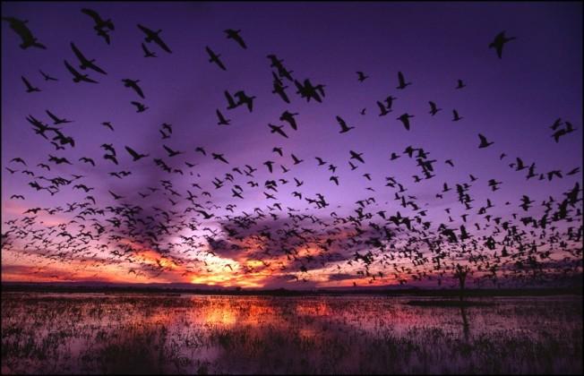 Birds and purple sky