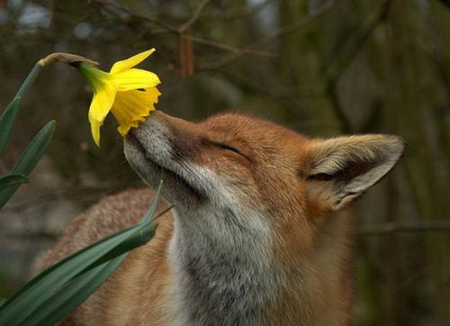 Daisy and fox